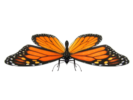 Butterfly Model 2 by Xanatos4