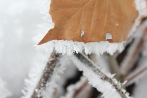 Under the touch of Jack Frost by NocturnalScribe