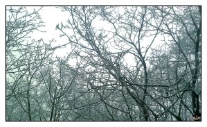 Snow on the trees by Yowie1991