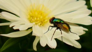 Fly On White by TreeClimber