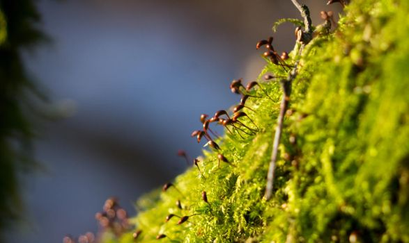 Moss by VohuManah