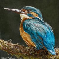 Kingfisher (drawing) by Quelchii