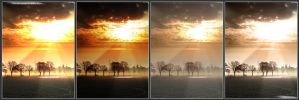 4 different views by alphawallace