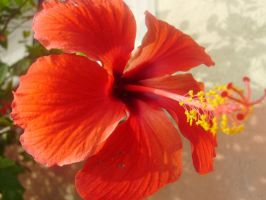 Simply Red by CMWVisualArts