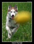 Fetch the ball by UnUnPentium115