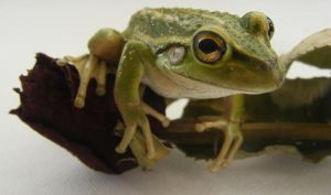 frog stock 176 by hatestock