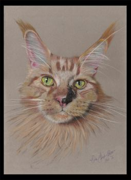 Milo the Maine Coon cat by Sassis