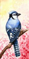 Blue Jay by Fjalldis