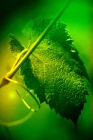 green time by K-O-Photography