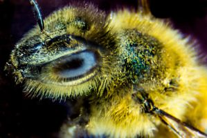 A Bee Eye by dannypyle