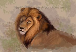 Lion realism practice by IPPO-Lita