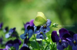butterfly by blancaJP
