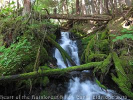 Heart of the Rainforest Hike 2013 11 by Mattsma