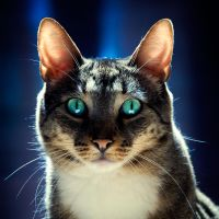 156 by Rainfeather