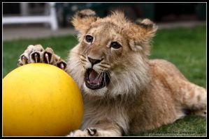 Playing ball by AF--Photography