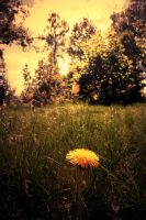 The Dandelion by zomx