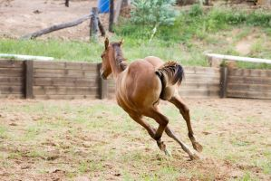 Km Foal canter turn behind view by Chunga-Stock