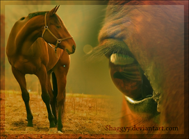 Horse and eye by Shaggyy