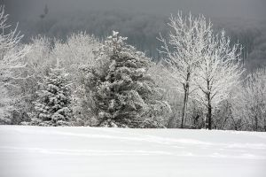 wintery background by 8moments