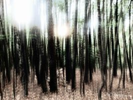 Slender Trees by AllAboutDianne
