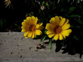 Flower Stock 20 by hp-abrasion