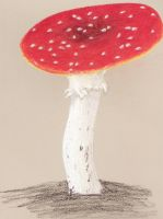 Another Mushroom by Pointy-Eared-Fiend