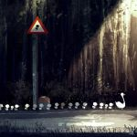 Bird crossing. by PascalCampion