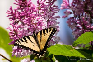 Butterfly on its flower by Gallynette