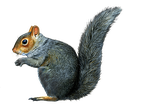 Pre Cut SQUIRREL by Moonglowlilly