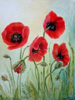 Poppies by Calissto