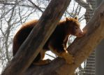 Tree Kangaroo by Destroyah93
