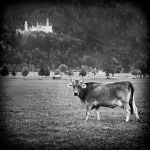 ...neuschwanstein II... by roblfc1892