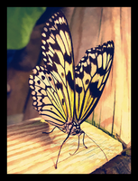 butterfly by onlyalive8
