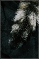Raccoon Cat Tail by GrotesqueDarling13