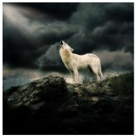 Cry Wolf by kiaStaal
