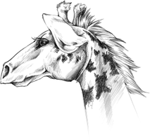 Giraffe sketch by ElysianImagery