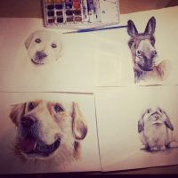Watercolour animals by claudaladywizard
