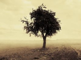 Tree. by jacekson