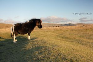 240110 Dartmoor Pony by InsaneGelfling