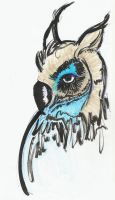 Owl by concho