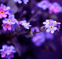 Forget me nots by ZoeWieZo