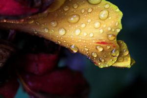 autumn tears IV by Grabo23