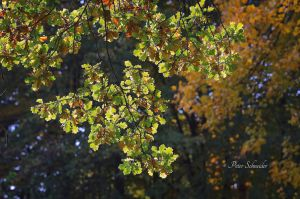 Autumnleaves. by Phototubby