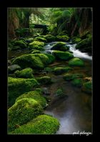 Rainforest Water II by paulmp