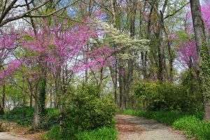 Tree Lined Path by desmo100