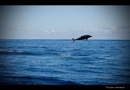 Flying Dolphin by filipelourenco
