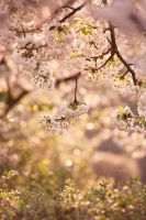 spring bokeh by Lain-AwakeAtNight