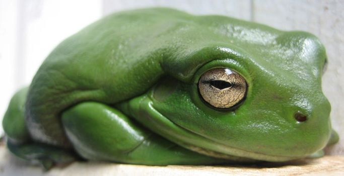Funny little frog by R-Kealy