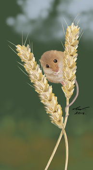 Harvest Mouse. by niveky