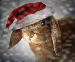 Christmas Bunny 2 by theworldiveknown